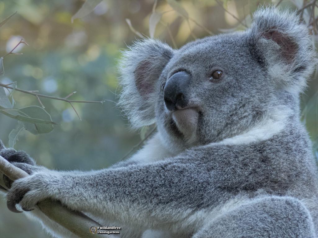 ready, set, pose by koalagardens