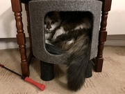 4th Aug 2020 - Cat in a box