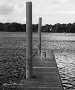 4th Aug 2020 - Gwen at Redbank Pier