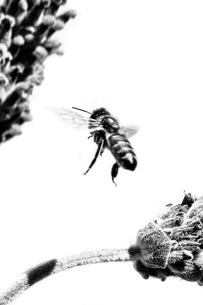 Buzzing by sugarmuser