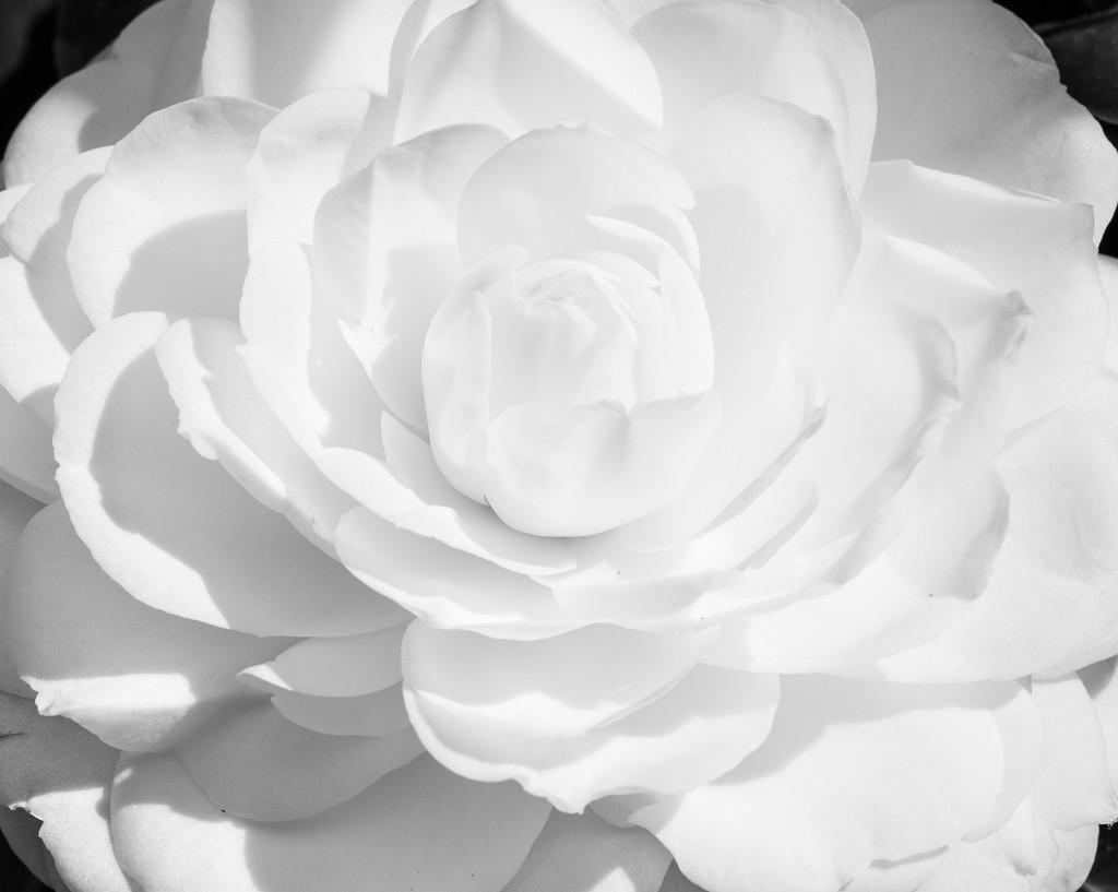 snow white by brigette