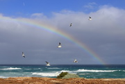 5th Aug 2020 - Somewhere Over the Rainbow