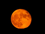 5th Aug 2020 - Orange Moon