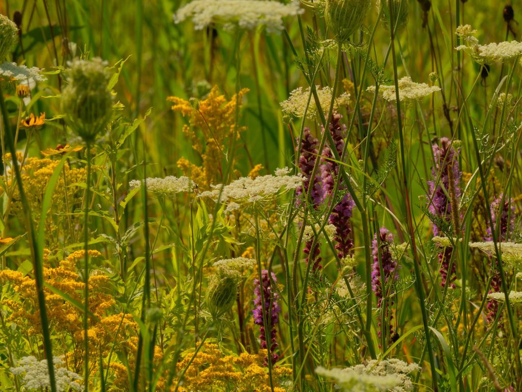 wild flower arrangement by rminer
