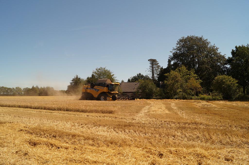 harvesting by gijsje
