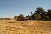6th Aug 2020 - harvesting