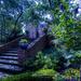 Blue Morning in the Garden