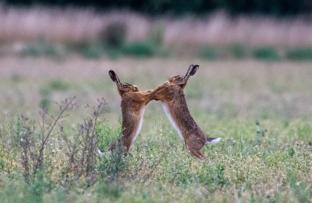 Right hook by stevejacob