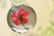 6th Aug 2020 - F - Flower