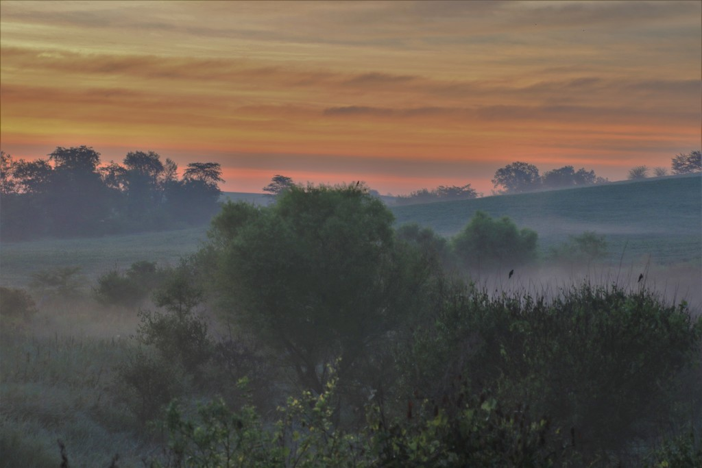 Misty Country Morning by lynnz
