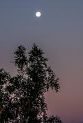 5th Aug 2020 - Morning moon
