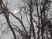 6th Aug 2020 - Trees and Moon