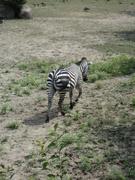 2nd Jul 2020 - Zoo Trip 2