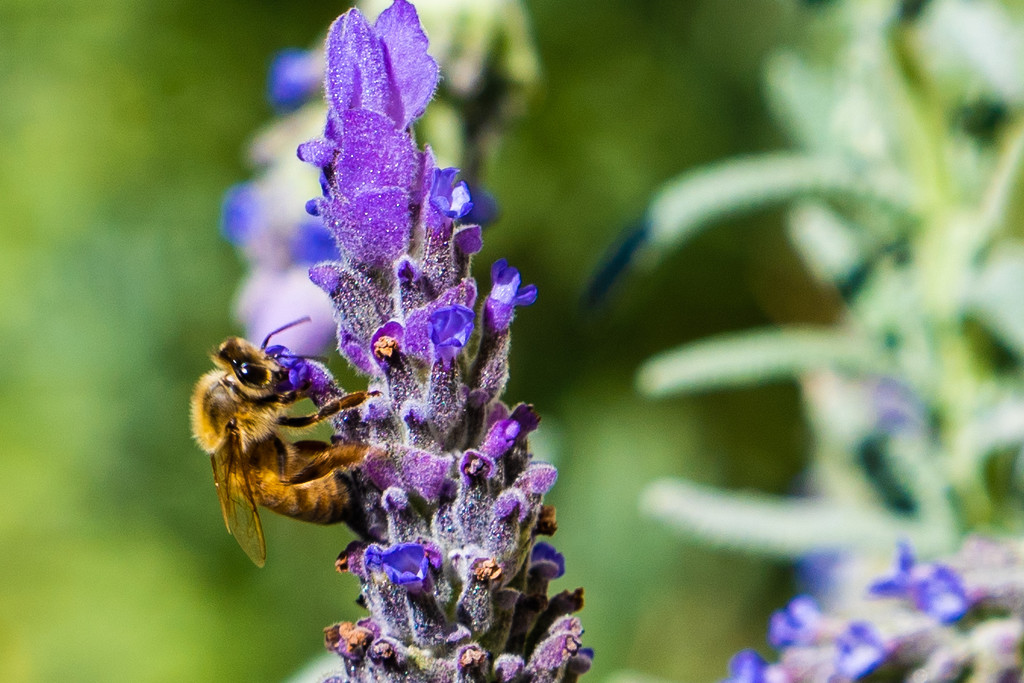 Bee-t it by sugarmuser