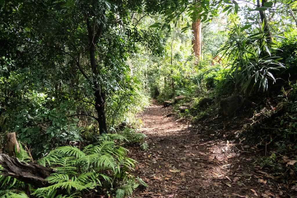 rainforest walk by hrs