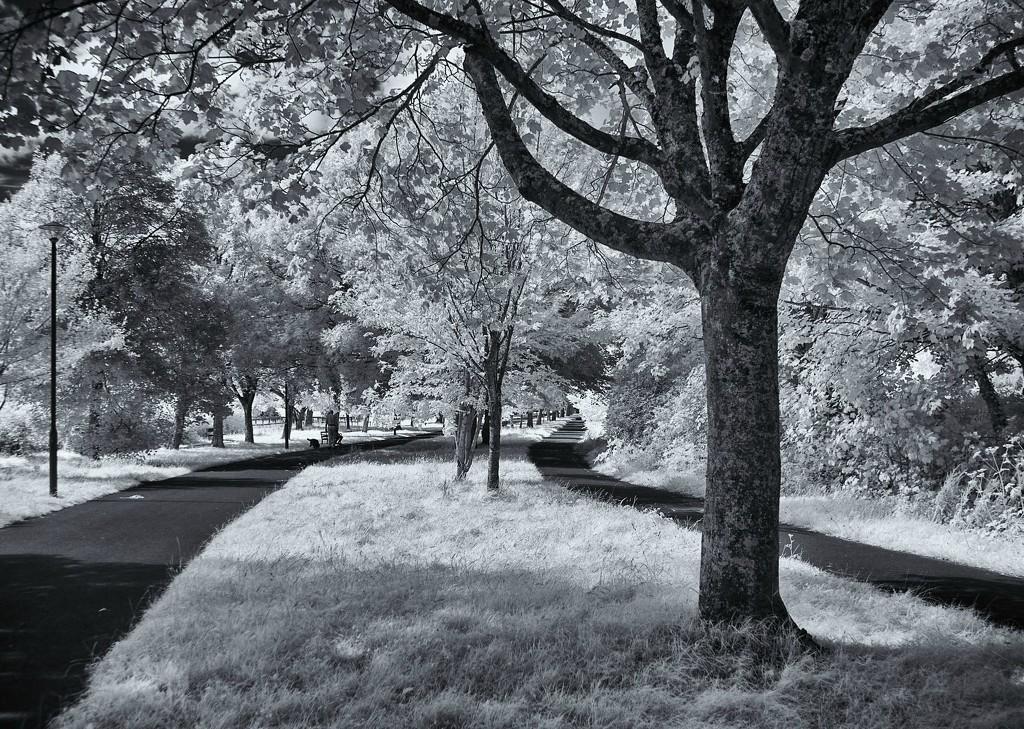Town Park by davidlostphojo