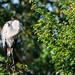 Heron in the sun
