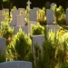 War graves Spanish flu by moonbi