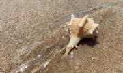 7th Aug 2020 - Sea shell