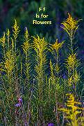 6th Aug 2020 - August Alpabet Words - Flower