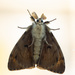 Moth by leonbuys83