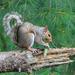 Squirrels eat pine cones?