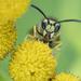 BEE kind by fayefaye