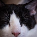 Freelensing Cats
