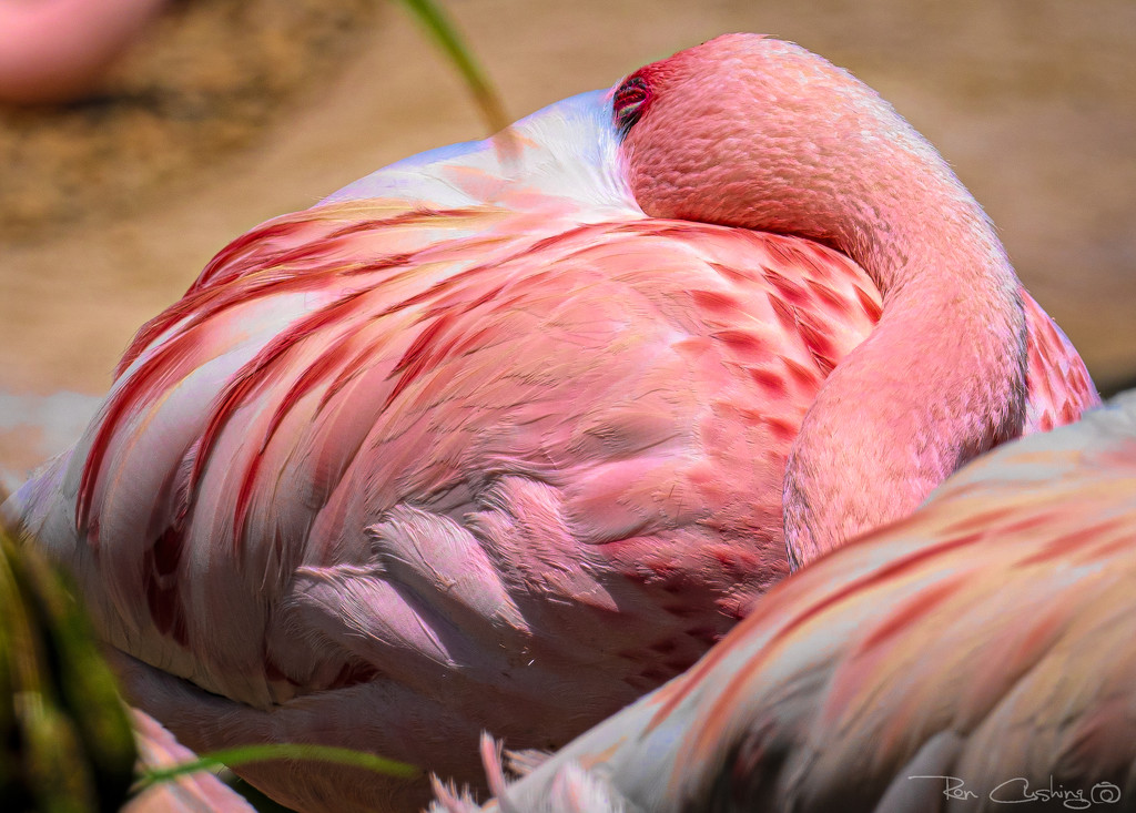 Flamingo Friday '20 21 by stray_shooter