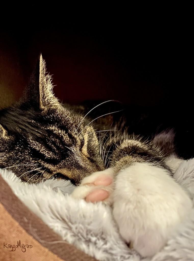 Soft Kitty, Sleepy Kitty 🎶  by mazoo