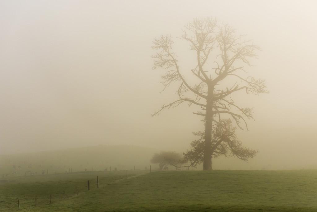 Foggy Morning by nickspicsnz