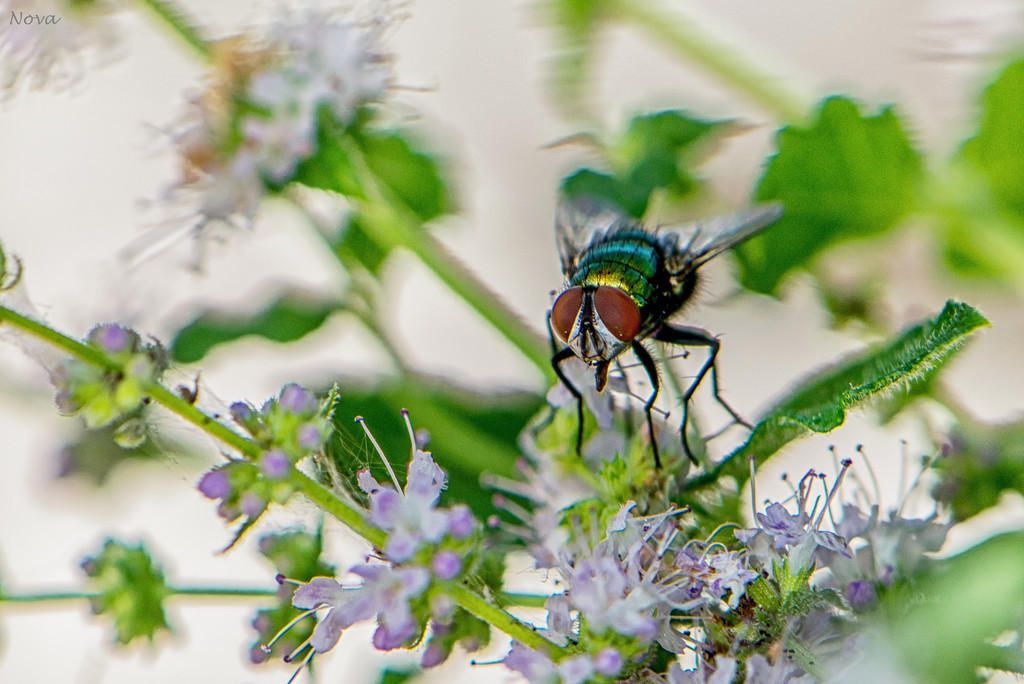 Fly & flowers by novab