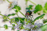 4th Aug 2020 - Fly & flowers