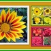 Gazania and two floral collages.