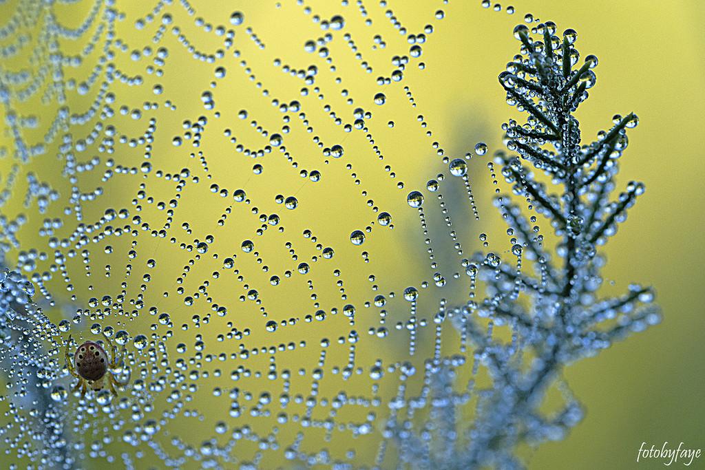 Morning Dew by fayefaye