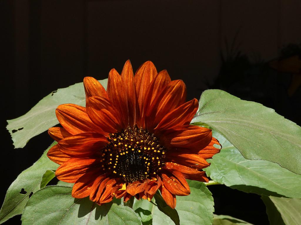 Burnt Orange by fotoblah