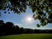 8th Aug 2020 - Sunrise & the trees