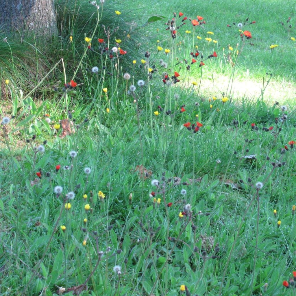 wild flowers by anniesue