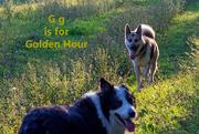 7th Aug 2020 - August Alphabet Words - Golden Hour