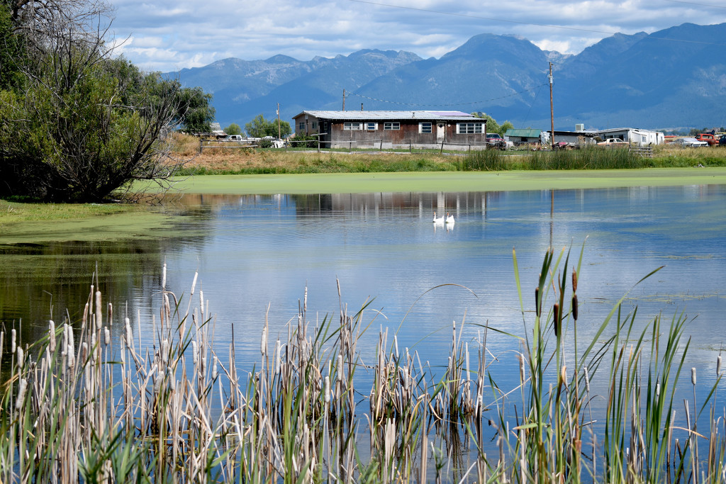 Pond Framed By Cattails and Mountains  by bjywamer