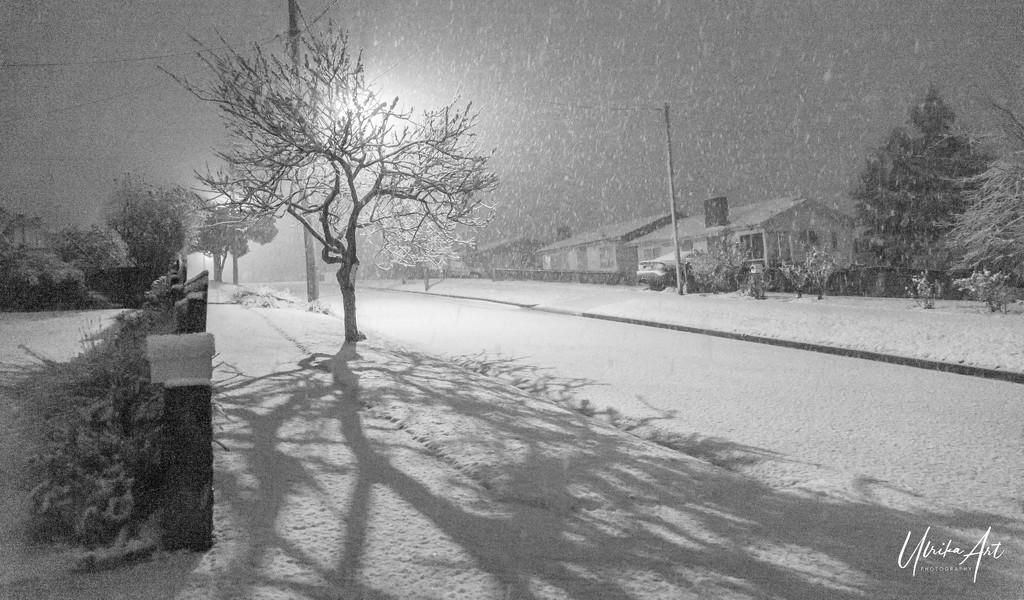 winter wonderland  by ulla
