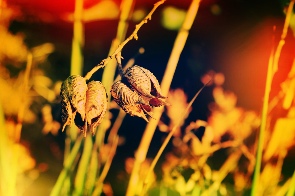 Empty seed pods on branch macro by kathyboyles