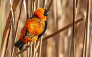 9th Aug 2020 - Red Bishop