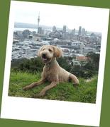 9th Aug 2020 - The city dog