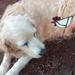 Tilly dog meet Snizty the glass chock