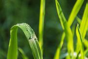 8th Aug 2020 - Raindrops