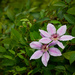 Second Bloom by gardencat