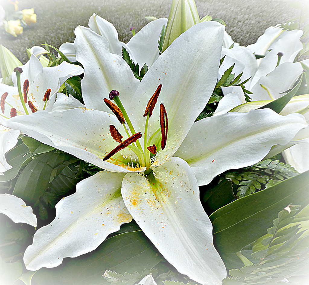 Lillies . by wendyfrost