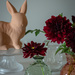 still life with dahlias by jackies365