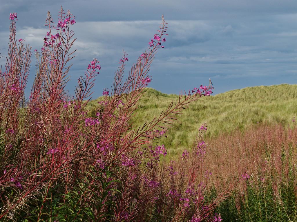 0809 - Northumberland by bob65